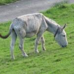 Donkey1110
