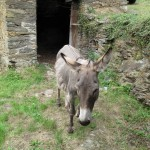 donkey2
