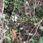 bottlesinundergrowth