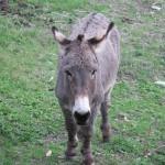 donkey20111110