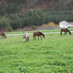 horsesblog20130114