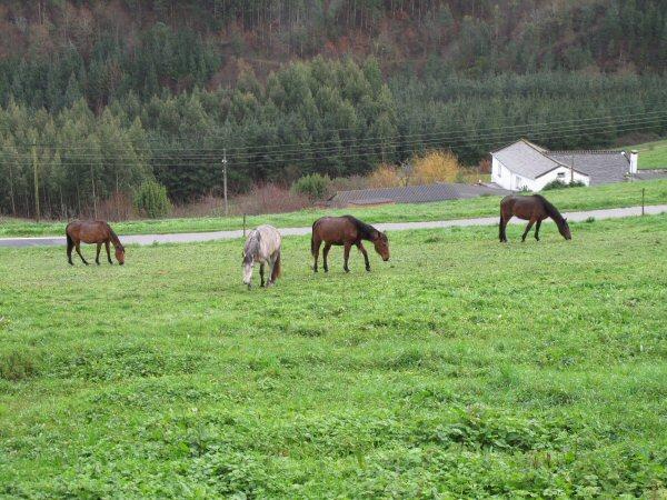 horsesblog20130114