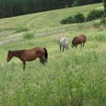 equine_mowers
