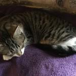 Kit_Asleep