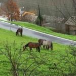 20130114horses